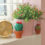 Why you should use faux plants in your home